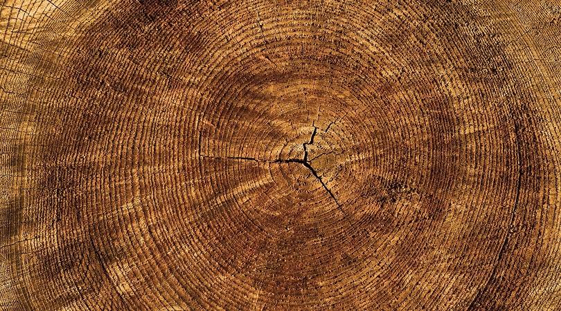 Holz als CO2-Senke